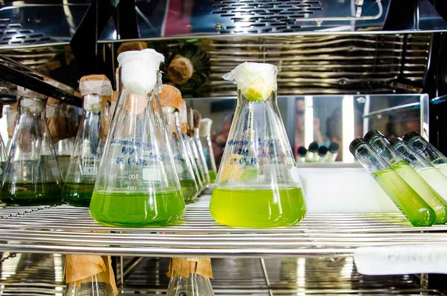 O Futuro Verde: Microalgas e Biotecnologia - Microbiologia.